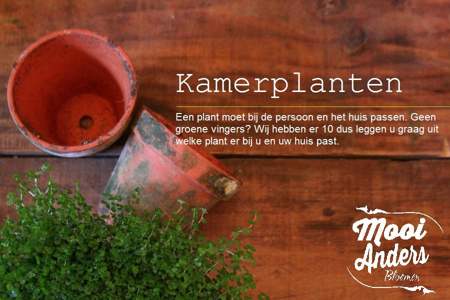 Kamerplanten Mooi Anders Bloemen Amsterdam