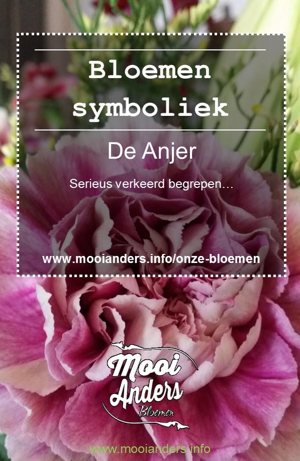 anjer symboliek bloemen
