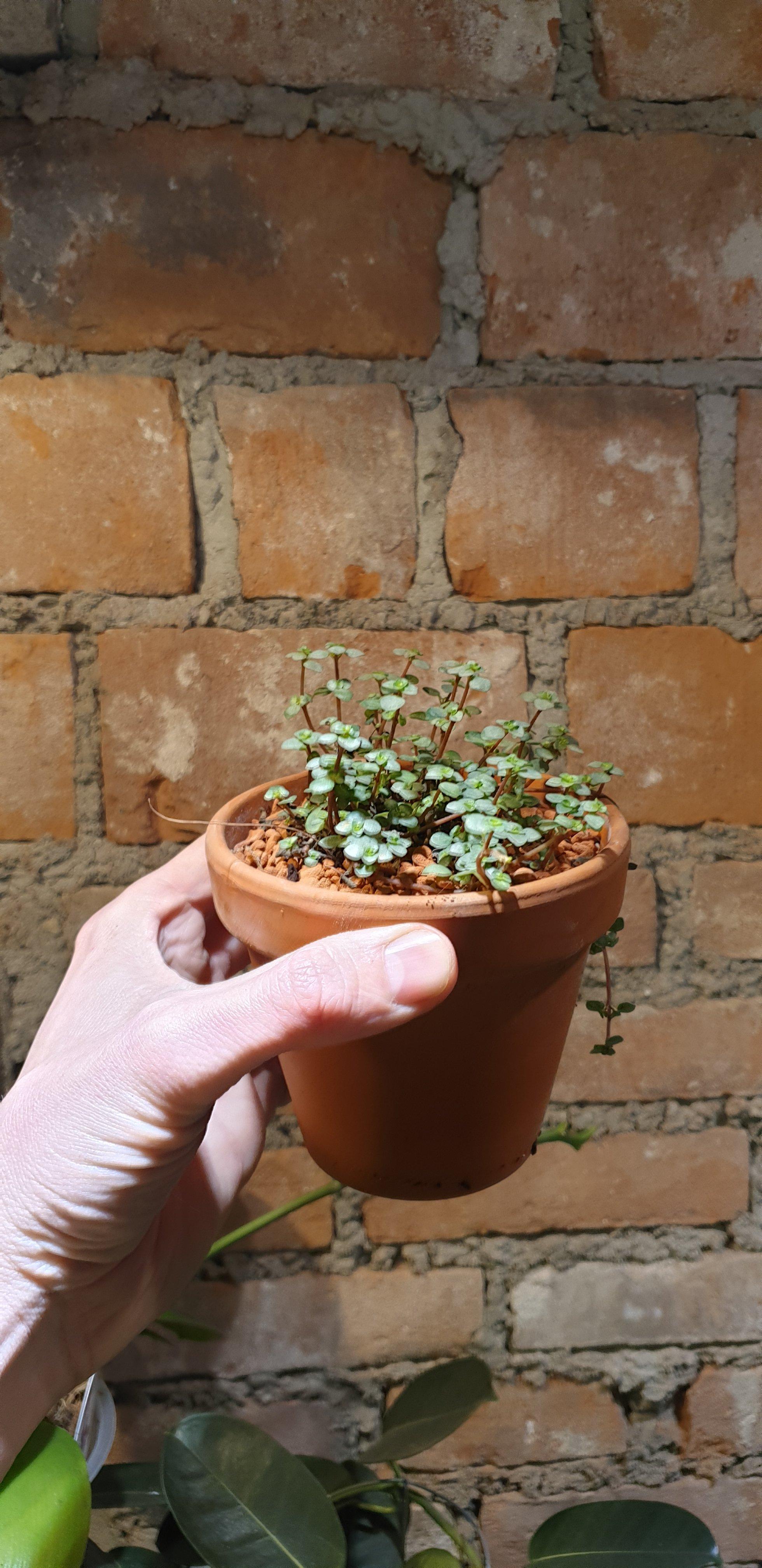 Zaterdag Kamer-plant-dag