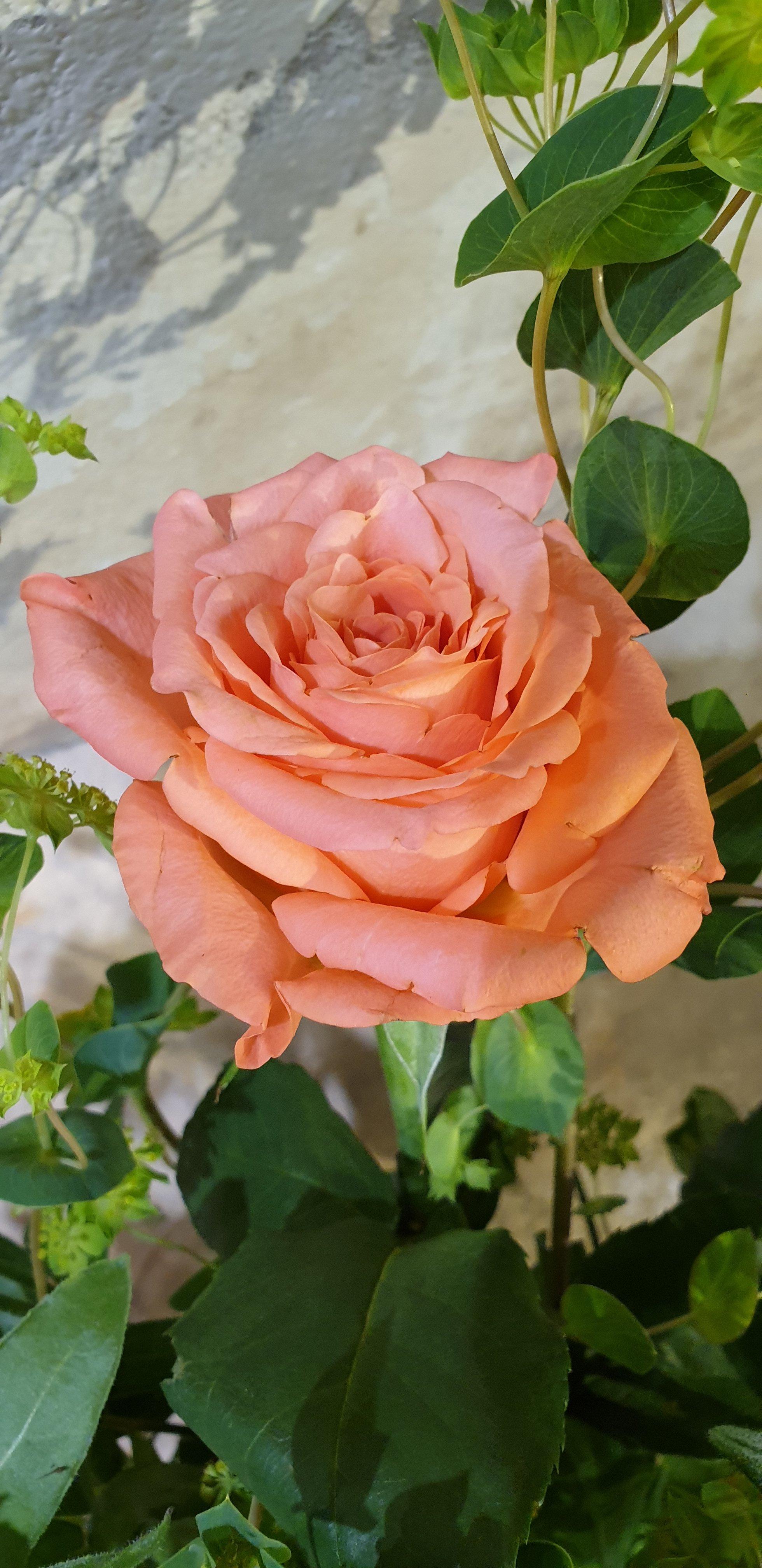 Enquête rouwbloemwerk