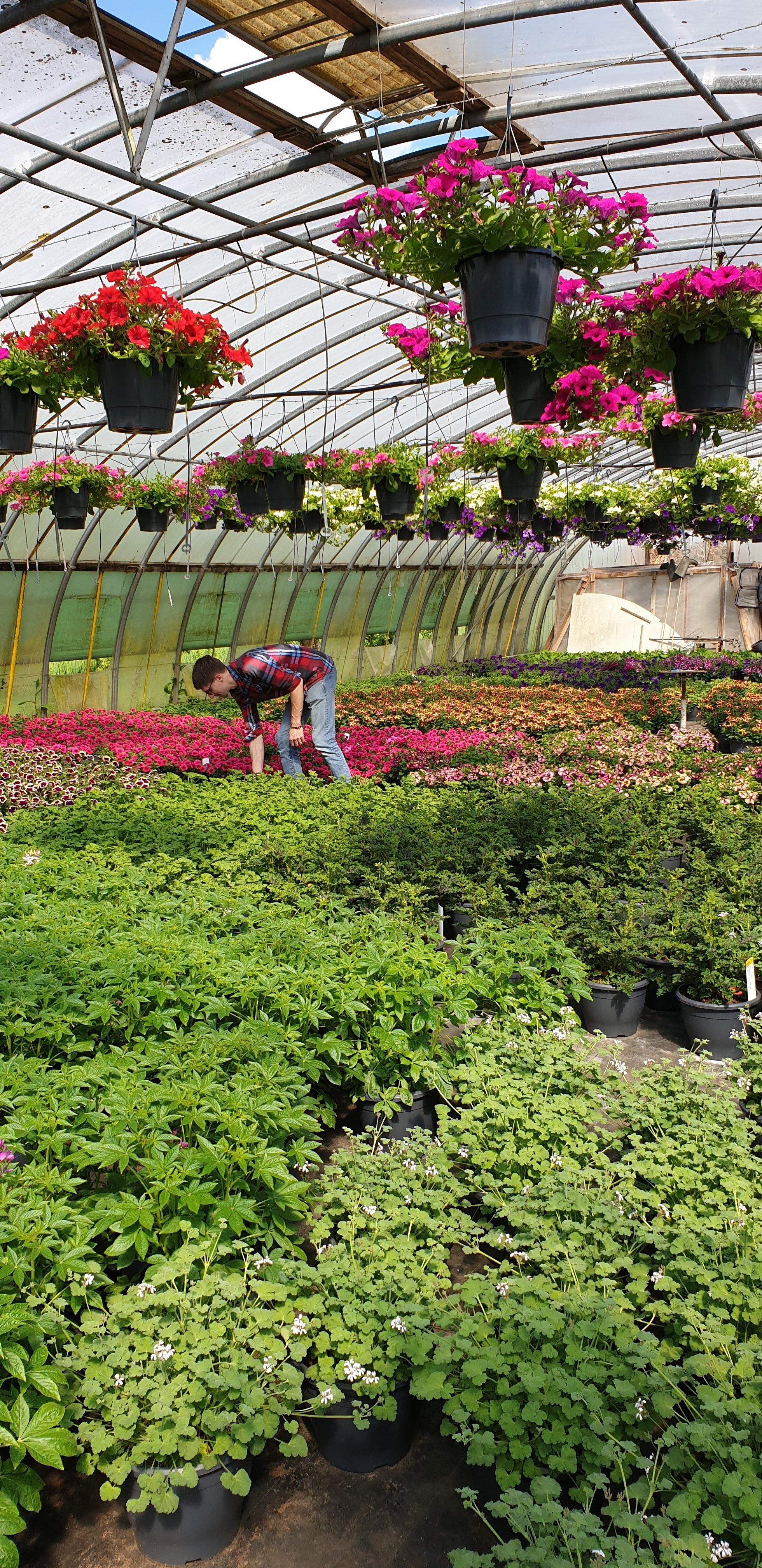 Mei-planten: een genot voor het oog en de neus!