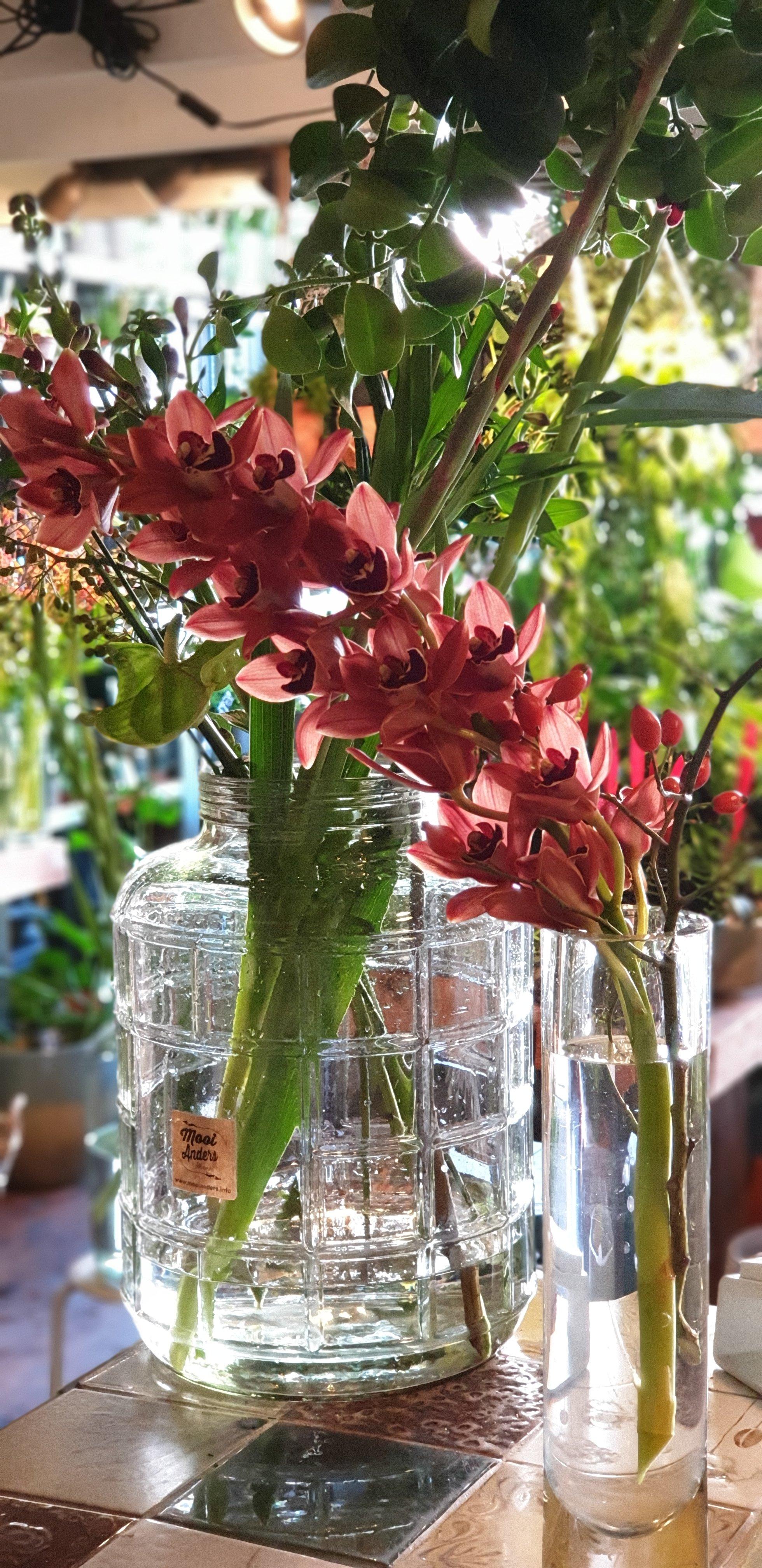 Ze zijn er weer! De Orchideeën van Ben en Marjan!