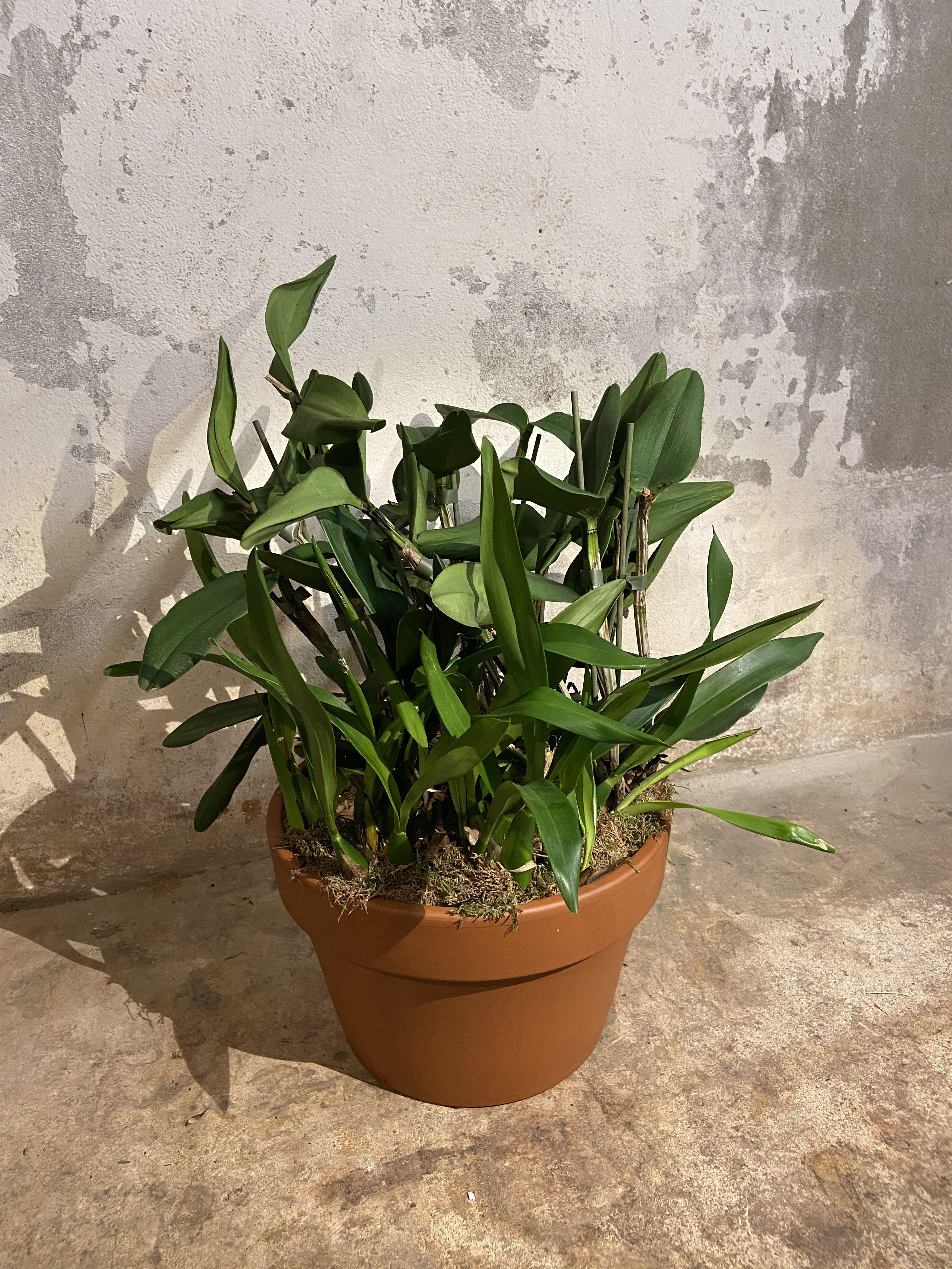 Orchideeën mix