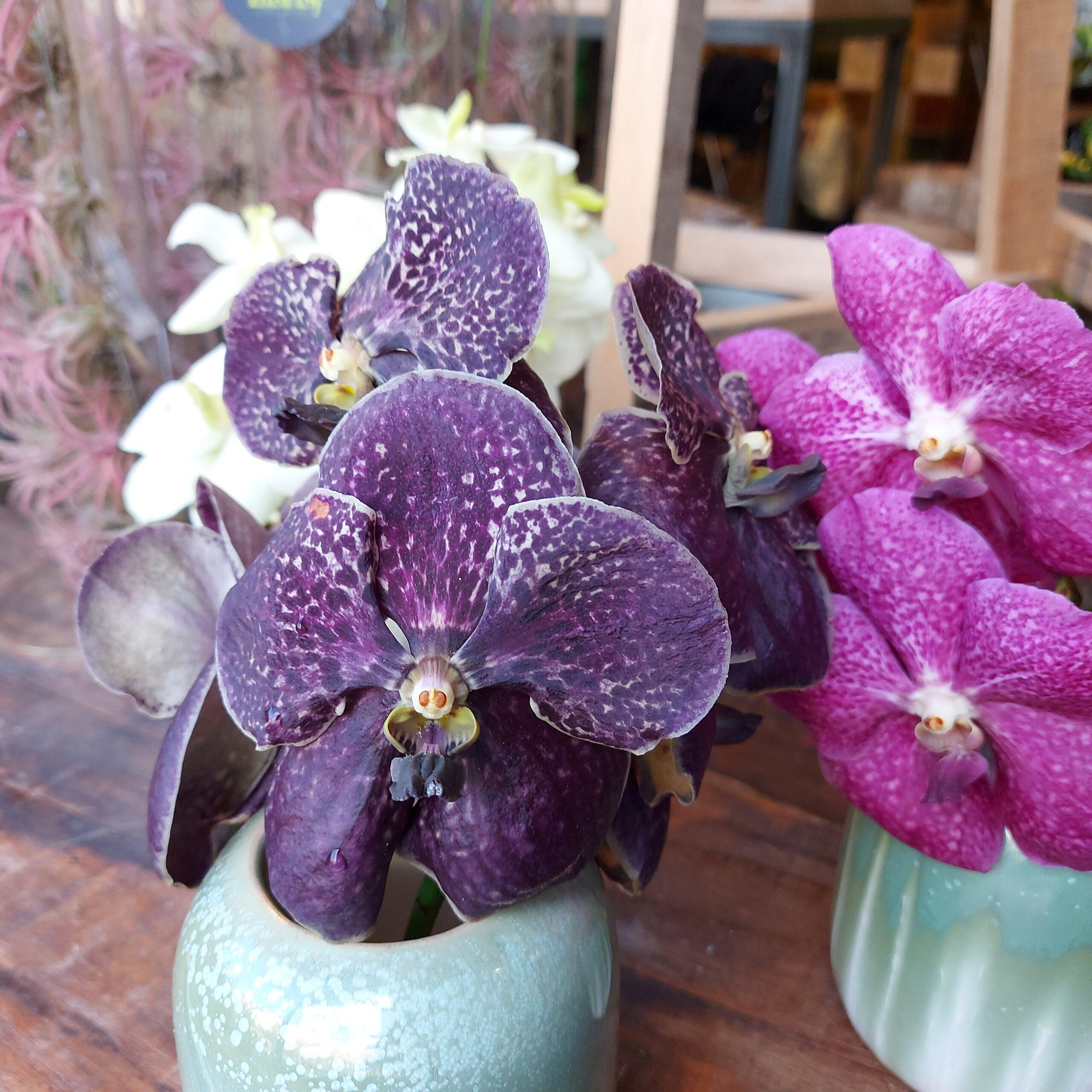 Planten of bloemen bezorgen of afhalen