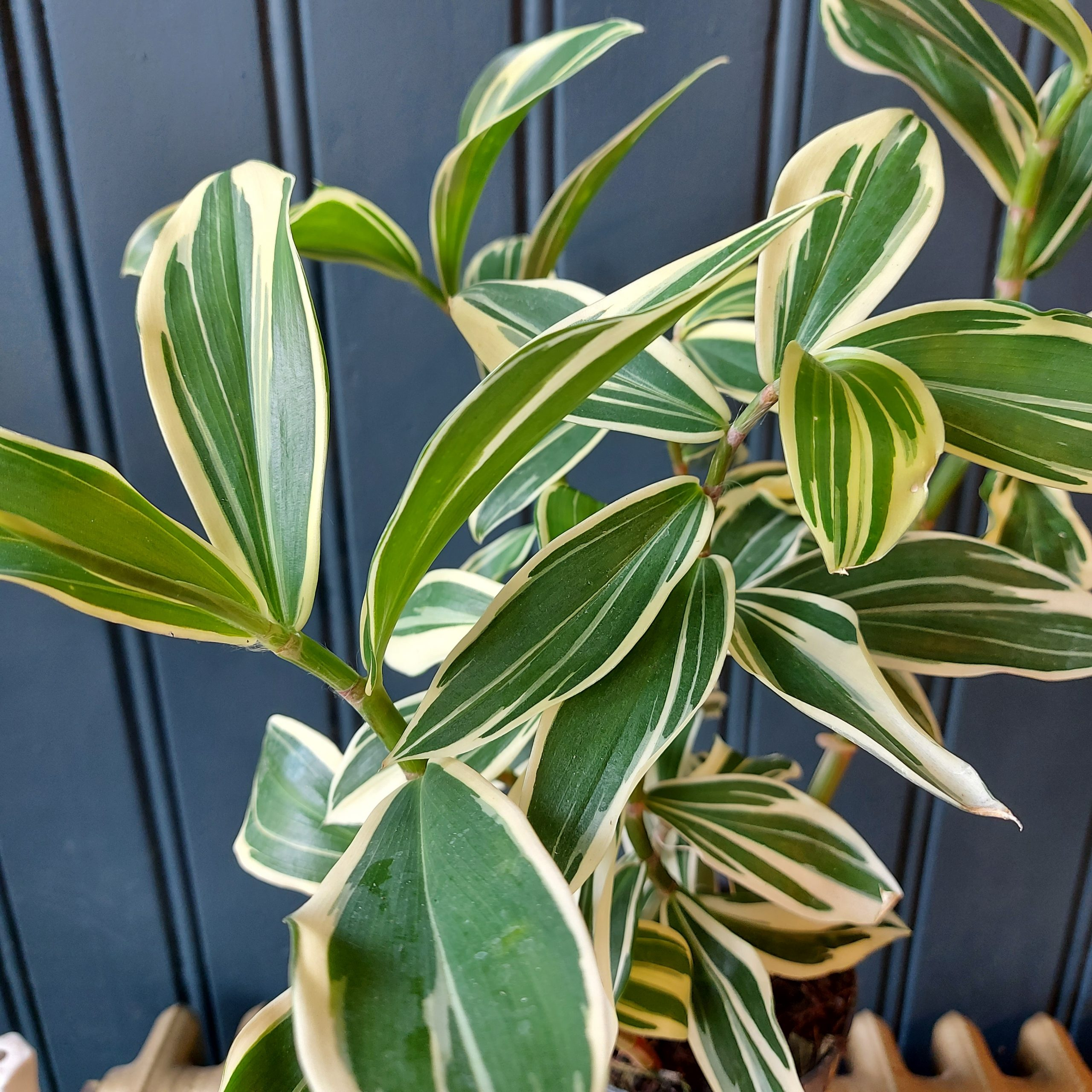Vakantie korting op planten